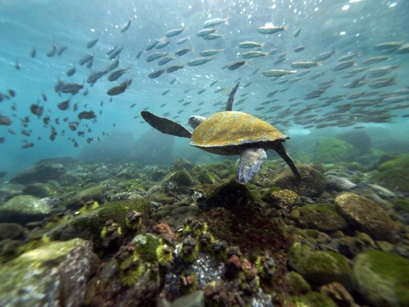 teknősök úsznak